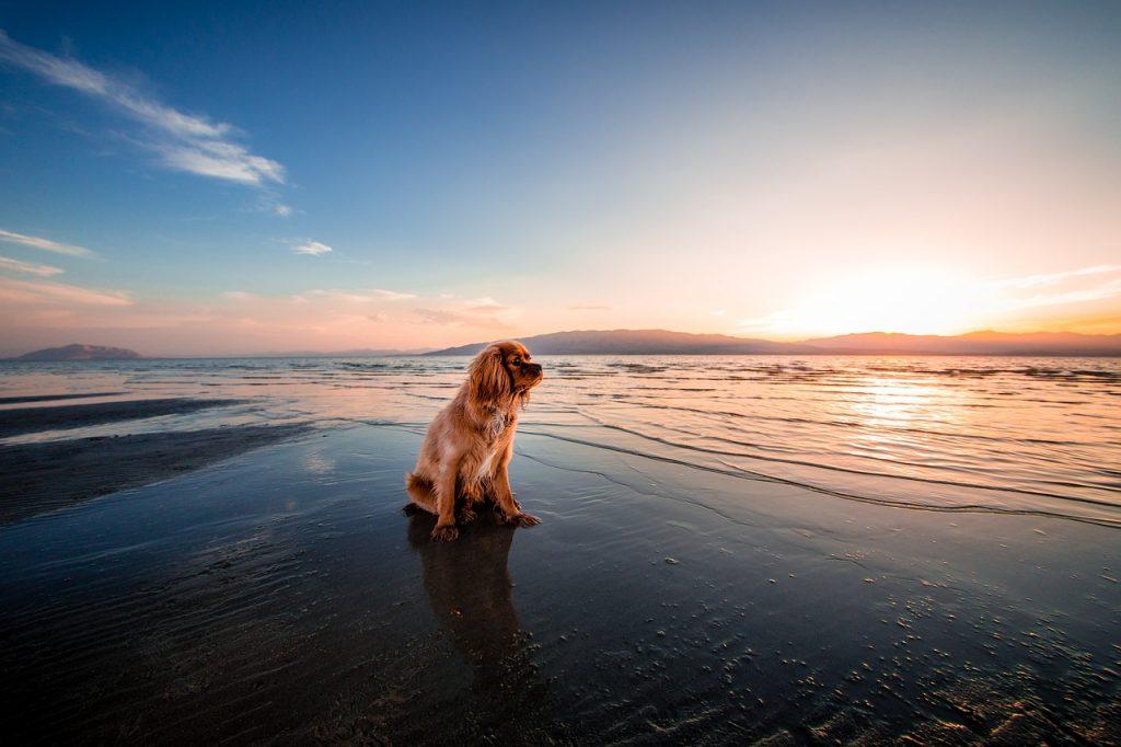 Urlaub mit Hund Heiligenhafen
